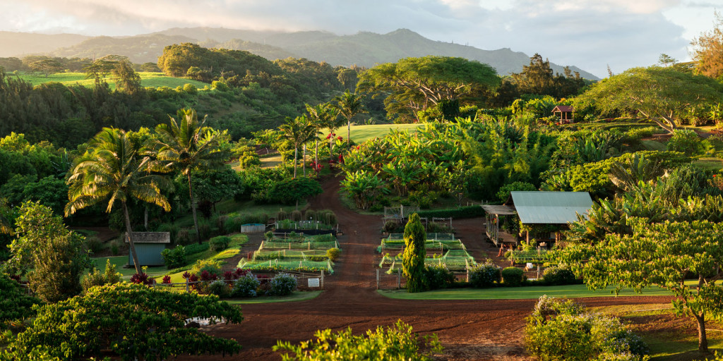 Paul's farm-kauai
